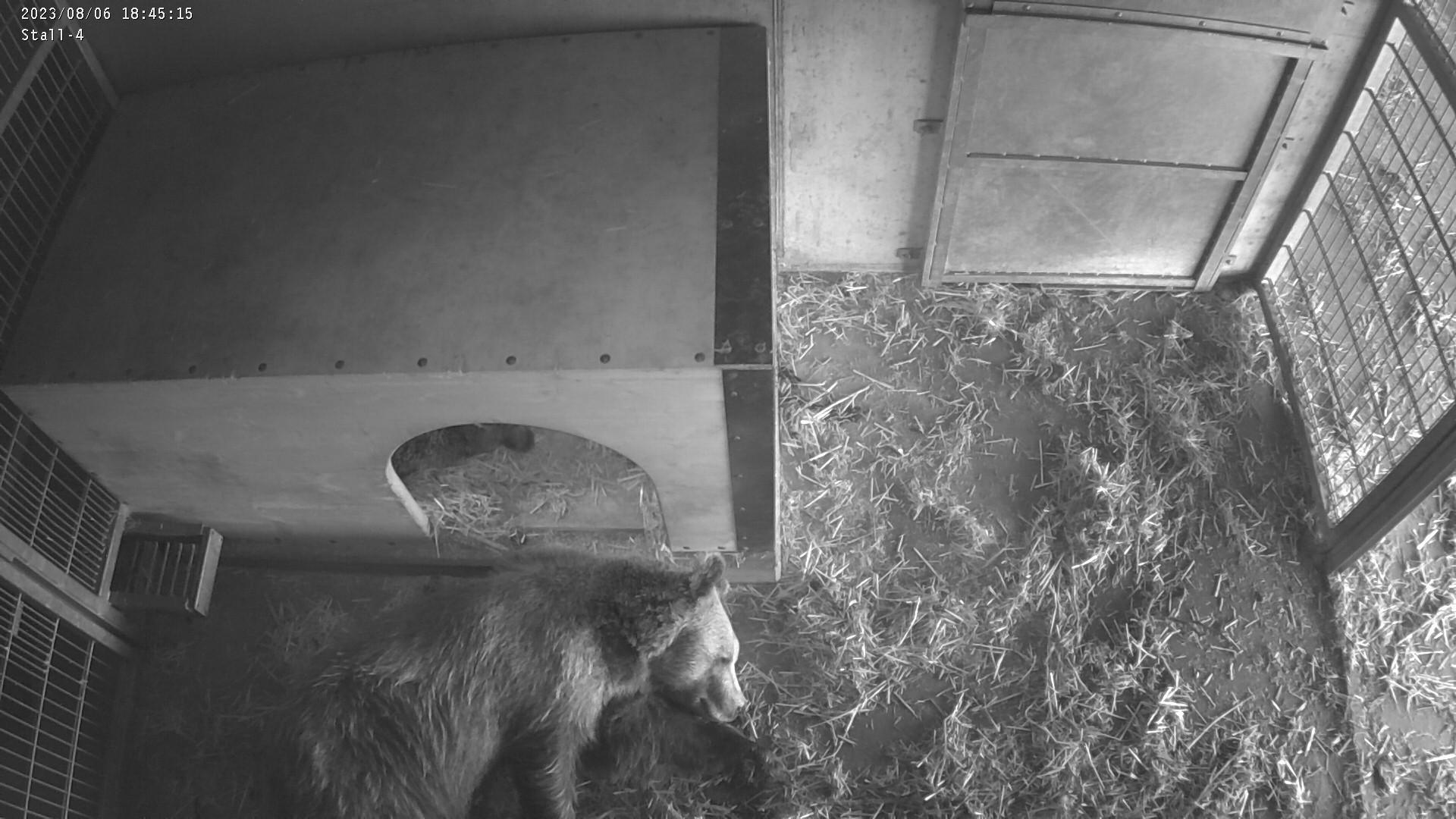 Stall 4: Jambolina